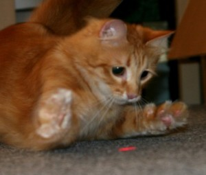 http://www.vetstreet.com/dr-marty-becker/are-laser-pointer-toys-really-safe-for-my-cat